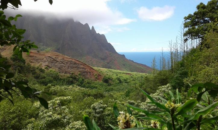 Pua Mana 1st Hawaiian Pakalōlō Seed Bank